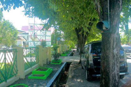Pohon kota yang dijadikan tiang listrik di Jalan Pangeran Suriansyah